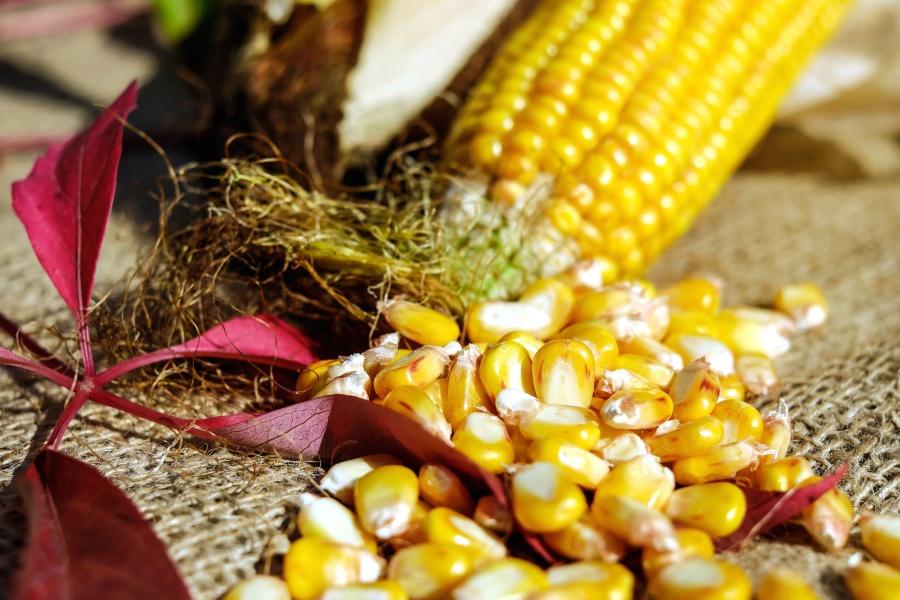 kukuřice, jádra, semena, jídlo, příroda, pytel