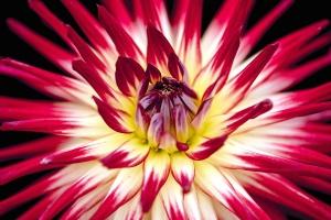 pistil, flower, nature, bloom, petals, plant