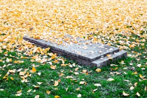 graveyard, lawn, grave, leaves, ground, field, grass