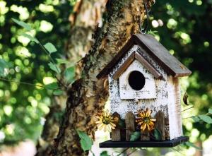 Сад, листья, птица, дом, филиал, дерево