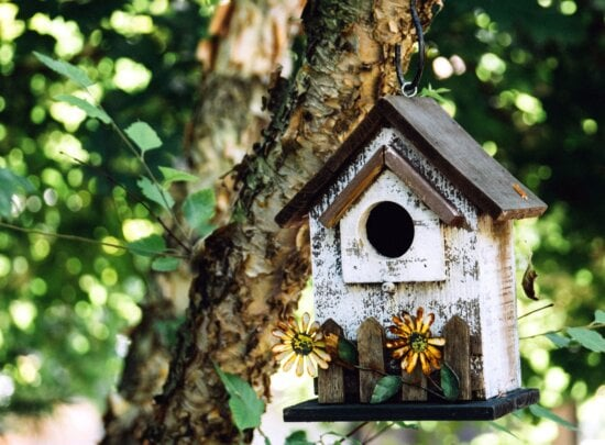 Giardino, foglie, uccello, casa, ramo, albero