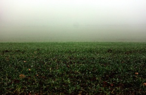 grassland, mist, nature, field, fog, grass