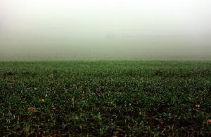 pastagem, névoa, natureza, campo, neblina, grama