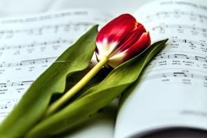 Música, papel, tulipán, floración, libro, flora, flor