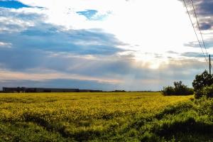 sky, summer, trees, agriculture, clouds, crops, farm, farmland