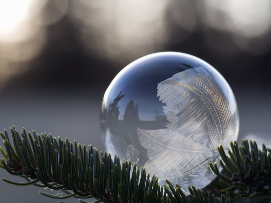tree, winter, bubble, sphere