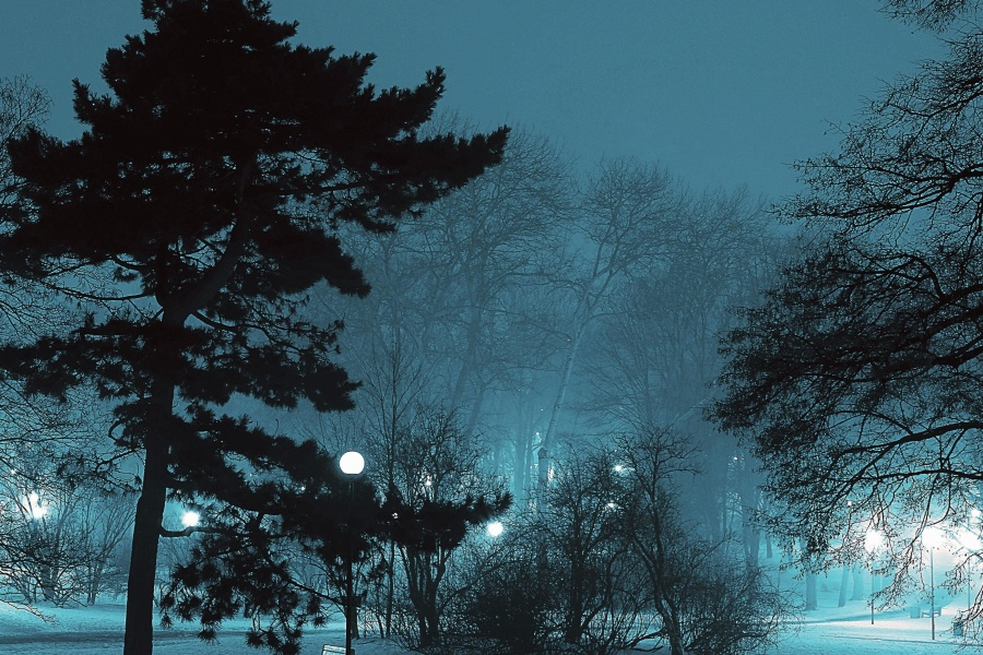 Silueta, nieve, árboles, tiempo, invierno, rama, frío, oscuro, amanecer, niebla, helada, congelado, hielo, lámpara