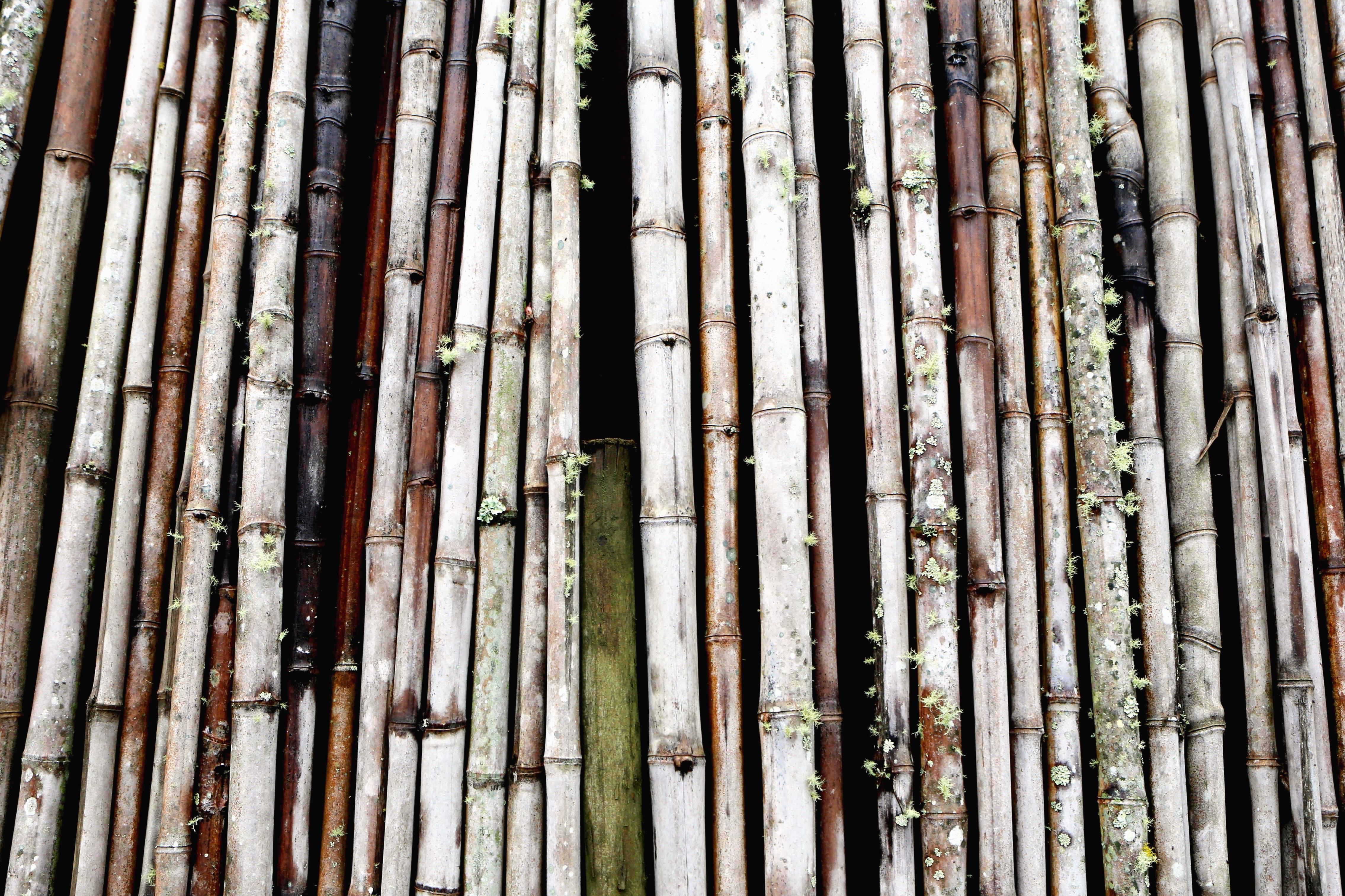 Kostenlose Bild Bambus beschaffenheit wand holz entwurf zaun