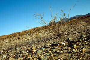 shrub, soil, desert, dry, ground, landscape, mountain