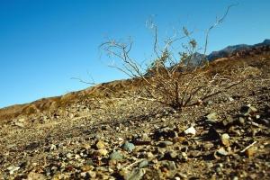 semak, tanah, pasir, kering, tanah, lansekap, Gunung
