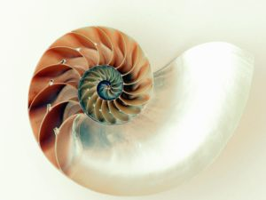 shell, spiral, sea