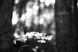 branch, woods, spider, tree, branch, woods, network