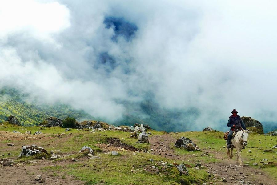 кон, планински, каубой, мъгла, яке, езда