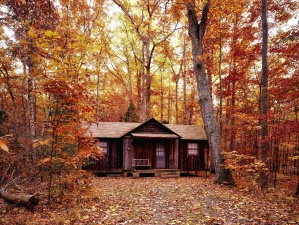 trees, woods, autumn, leaves, beautiful, color, forest, house, landscape