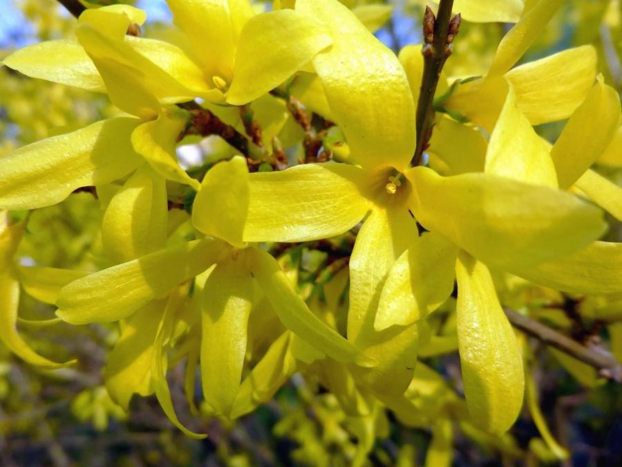 Fiore Giallo 6 Petali.Foto Gratis Cespuglio Fiore Giallo Fiore Fioritura Petali