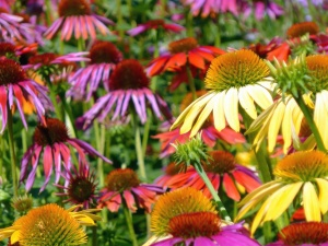 여름, 꽃, 식물, 노랑, 식물, 꽃, 꽃잎, 꽃, 식물