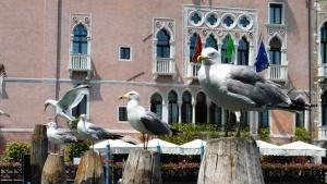 bird, building, seagull, building, windows, city