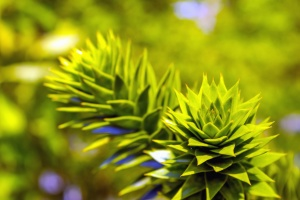 plant, leaf, green, spring, garden, nature