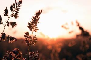 roślin, łodyga, lato, słońce, niebo, grass