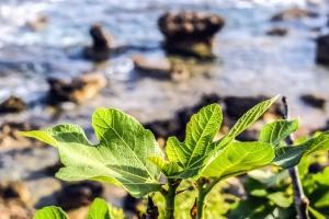 kiviä, meri, rannikolla, lehtiä, vesi