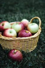 basket, apples, herbs, fruit, healthy, juicy