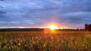 Sun, sky, fields, nature, sunset, landscape