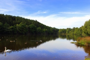 water, forest, wood, river, sky, nature, swan