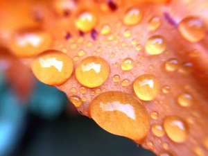 folha, água, natureza, queda, chuva