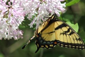 borboleta, flor, flor, natureza, colorida, bonita