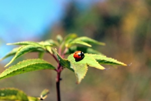 plant, flora, green leaves, insect, ladybug