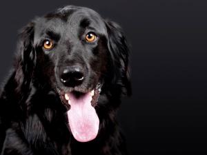 estúdio de fotografia do animal de estimação, cão,