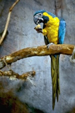 colourful, macaw parrot, animal, bird, branch