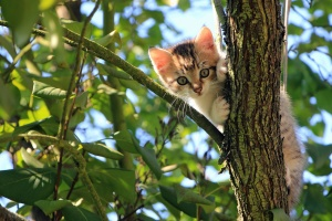 cat, cute, feline, kitten, kitty, pet, tree, adorable, animal