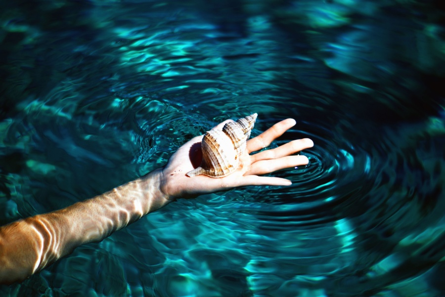 hand, shell, swimming pool, water, arm, ripple