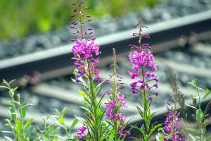 Fleurs, plantes, chemin de fer, chemin de fer, fleur, flore, flore