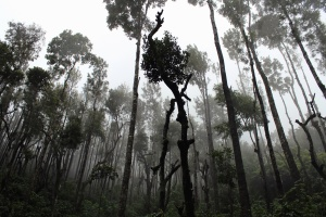 rainforest, trees, woods, fog, forest, nature