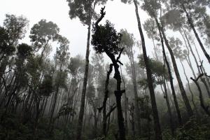 тропічний ліс, дерев, Вудс, туман, ліс, природа