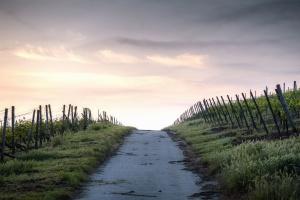 селски, небе, култури, растителност, дърво, пътя