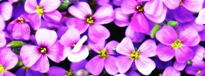 płatki, różowy, rośliny, kwiaty