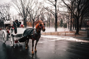 horse, snow, carriage, park, city, cold, street, travel, trees, wet, winter