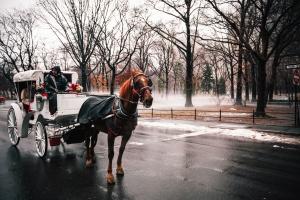 кон, сняг, превоз, парк, град, студ, улица, пътуване, дървета, мокро, зима