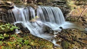 Rio, pedras, fluxo, água, cachoeira, bosque, cascata, paisagem