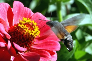Ronzio uccello, insetto, pianta, fiore, fioritura