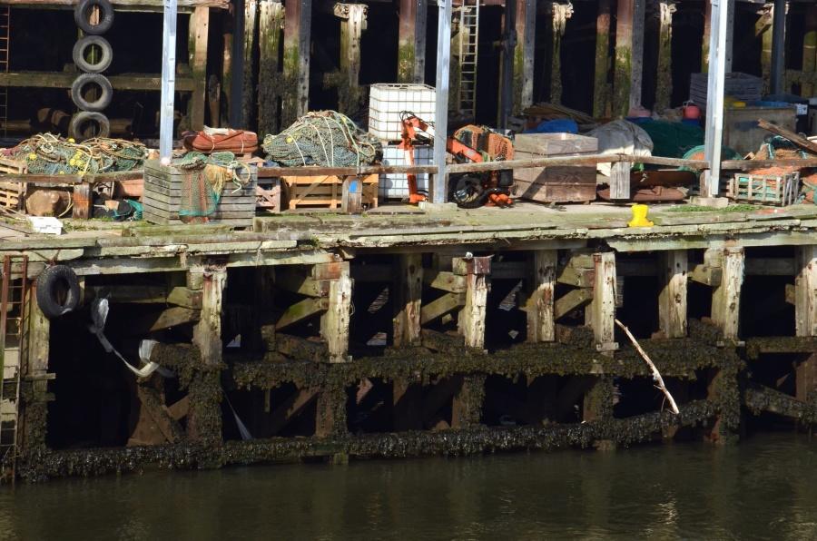 Eau, bois, algues, pêche, quai, mer