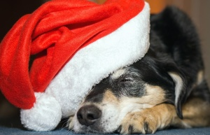 dog, muzzle, mouth, hat, christmas