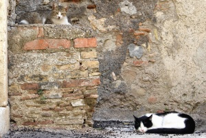 cat, animal, domestic cat, kitten, wall