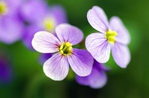 petals, plant, botanical garden, pistil