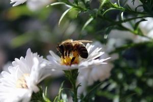 insekt, bi, bloom, blossom, pollen, blomster, haven, honning