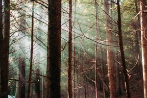 나무, 숲, 침, 숲, 풍경
