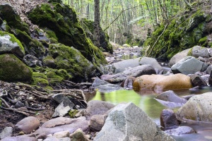 river, rocks, travel, trees, water, woods, flow, forest, landscape